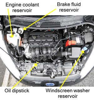 Show and Tell (Vehicle Safety Checks) - Under the Bonnet diagram